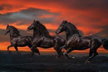 plakat BOB LANGRISH - FANTASY HORSES