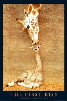 plakat FIRST KISS