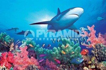 plakat OCEAN LIFE